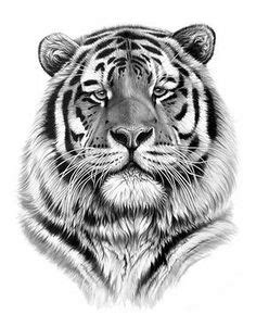 Pin by Tina Daws on Tigers   Pinterest   Tigers and Animal
