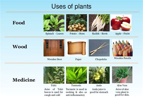 environmental science evs plants   class iii