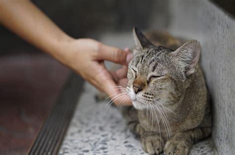 gatti alimentazione alimentazione estiva dei gatti come gestire il cibo con l