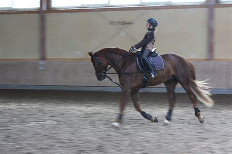 ferien mit pferd willkommen auf dem reiterhof reisemagazin