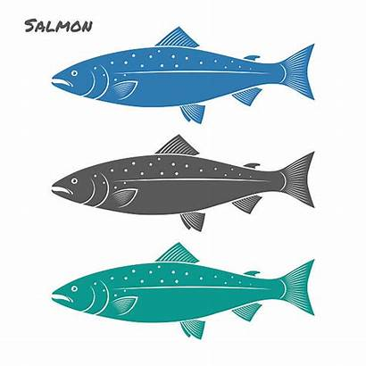 Salmon Fish Vector Illustration Jumping Illustrations Clip