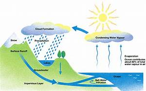 The Diagram Below Shows The Water Cycle  Which Is The