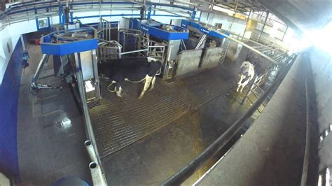 golden hill farm delaval vms robotic milking  abc grazing youtube