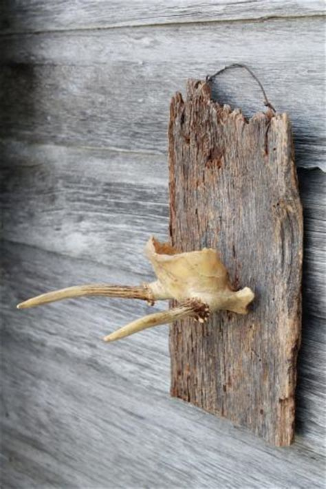 collection  deer antler mounts antlers  rustic wood boards vintage mountings