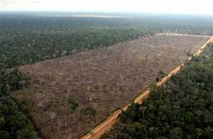 10 Facts about Deforestation in the Amazon Rainforest ...