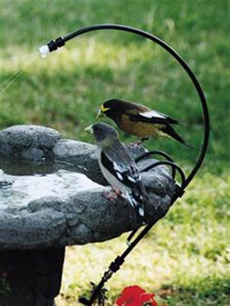 17 best ideas about wild birds on pinterest wild bird