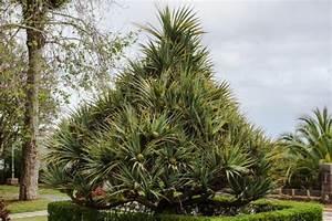 Was Ist Das Für Ein Baum : frage an die botaniker was f r ein baum ist das ~ Buech-reservation.com Haus und Dekorationen