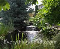 pond shapes and design Pond Designs - Everything-Ponds.com