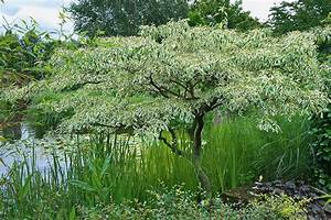 Kleiner Baum Mit Breiter Krone : der hausbaum welcher darf es sein gartenzauber ~ Michelbontemps.com Haus und Dekorationen