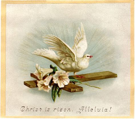 beautiful easter dove image   graphics fairy