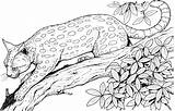 Coloring Cat Cats Leopard Tree Realistic Adult Colour Adults Animals sketch template