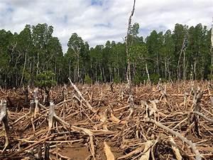 Eden  Lost  The Ecological Disaster Of Deforestation