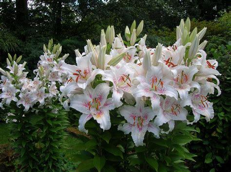 wisteria wedding gardens port orchard wa 98367 253 514