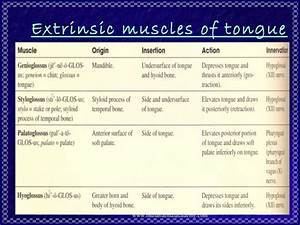 Muscle Physiology  2