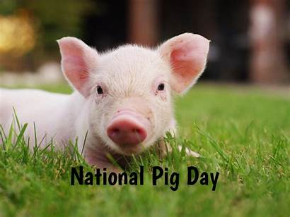 Pig National Celebrated 2021 Why Qualads