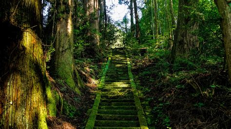 wallpaper  stairs moss trees japan