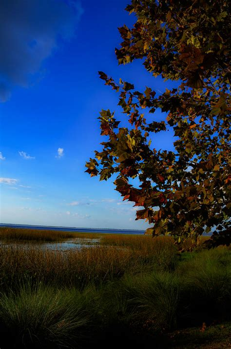 florida fall foliage central florida fall foliage photograph by dick hudson