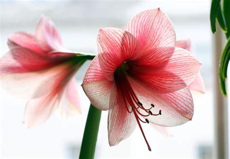 Fiore Flowers by Prepariamoci Al Natale Ingrosso Fiori Gambin