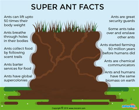 fun facts about ants for preschoolers 10 fascinating facts about ants gifographic for 219
