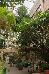 Jardin D Interieur : jardin int rieur coll ge de maisonneuve ~ Dode.kayakingforconservation.com Idées de Décoration