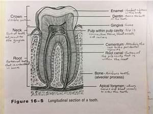 Mouth Diagrams