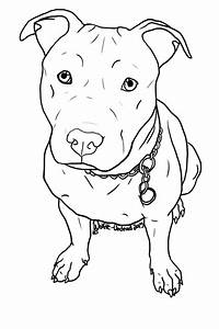 Drawn pit bull pitbull puppy - Pencil and in color drawn ...