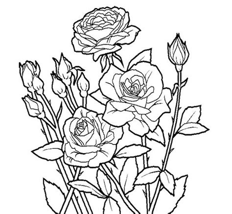 Rose Flower Unique Coloring Page For Kids Action Man