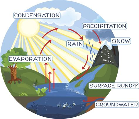 Water Cycle Images A Simple Guide To The Steps Of The Water Cycle
