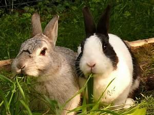 Kaninchenkäfig Für 2 Kaninchen : abk hlung f r kaninchen im sommer haustiere ~ Frokenaadalensverden.com Haus und Dekorationen