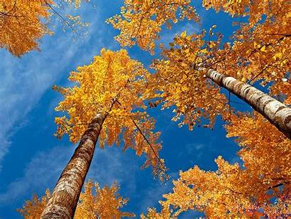 Autumn Scenery Wallpapers Desktop Fall Backgrounds Nature