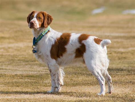La Jolla Dog Club