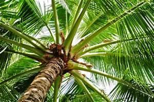 Welche Erde Für Palmen : winterharte palmen beliebte garten palmenarten ~ Watch28wear.com Haus und Dekorationen