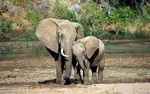 Elephant Mother Baby | Worth While World | Pinterest ...