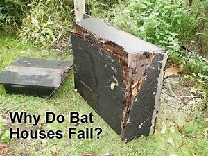 Why Do Some Bat Houses Fail? – Bat Conservation and