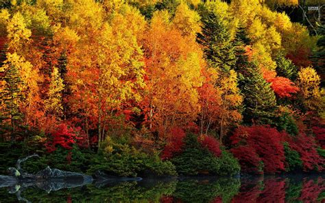 Autumn Wallpapers by Adorable Autumn Forest River Wallpapers Adorable