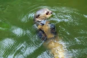 Amazon River Animals