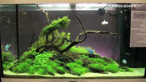 best water tank aquascaping aquarium ideas from aquatics live 2012 part