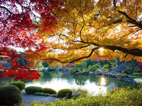 Tokyo In Autumn The Best Things To See And Do  Lonely Planet