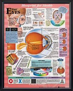 1000+ images about The Eye on Pinterest | Eye Anatomy, Dry ...