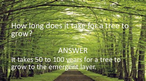 how does it take a tree to grow sub canopy adeel alashaye and david