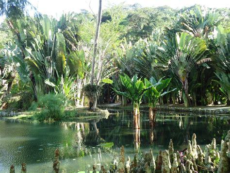 for 234 t de tijuca jardin botanique rio de janeiro