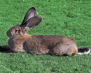 Vitesse Des Animaux : pin le lapin suite a un exces de vitesse et une on pinterest ~ Medecine-chirurgie-esthetiques.com Avis de Voitures