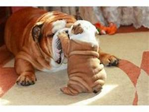 wrinkly dogs