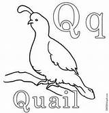 Quail Coloring Pages Preschool Kindergarten Letter Printable Gambel Activities Animals Animal Wwe Worksheets Sheets Coyote Hubpages Posted Am Printed Unknown sketch template