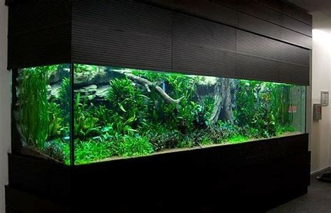 liter planted aquarium speechless   water