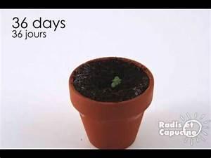 Faire Pousser Des Fraises : les fraises c 39 est facile faire pousser youtube ~ Melissatoandfro.com Idées de Décoration