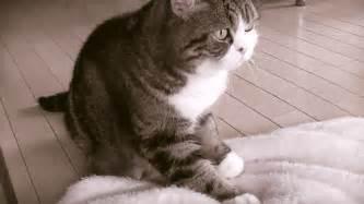cat kneading not abnormal cat behavior pet attack