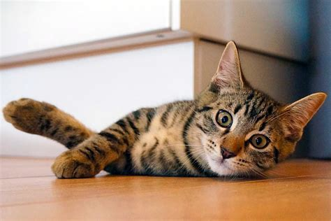 21 Cat Behaviors, 32 Cat Sounds And Their Secret Meaning