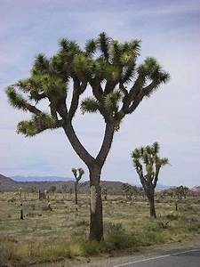The Food Web Of The Mojave Desert