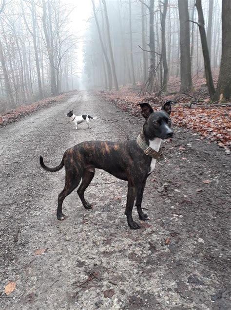 wie weit darf mein nachbar an mein grundstück bauen hunde die f 252 r den verein freunde der tiere e v